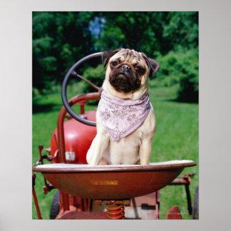 Pug on lawnmower wearing bandana poster