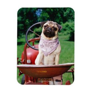 Pug on lawnmower wearing bandana rectangular photo magnet