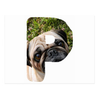 pug on letter.png postcard