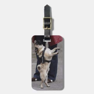 Pug Out Of Control Bag Tag