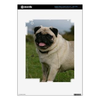 Pug Panting iPad 3 Skin