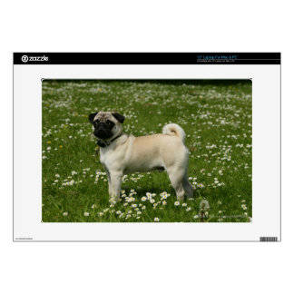 Pug Playing in Flowers Laptop Decals