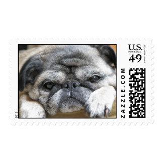 pug postage