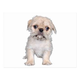 """Pug "" Postcard"