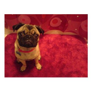 Pug Postcard Machi