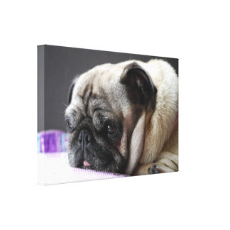 PUG - PUG/Photography Jean Louis Glineur Canvas Print