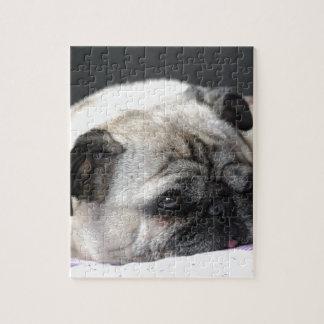 Pug pug - Photography: Jean Louis Glineur Jigsaw Puzzle