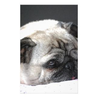 Pug pug - Photography: Jean Louis Glineur Stationery