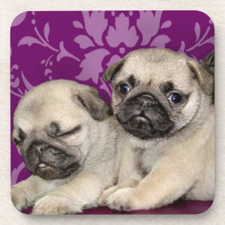 Pug puppies dog coaster