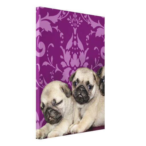 Pug Puppies Gallery Wrapped Canvas