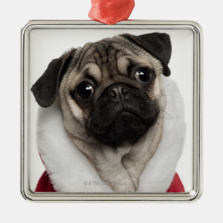 Pug puppy (6 months old) wearing a Christmas Ornaments