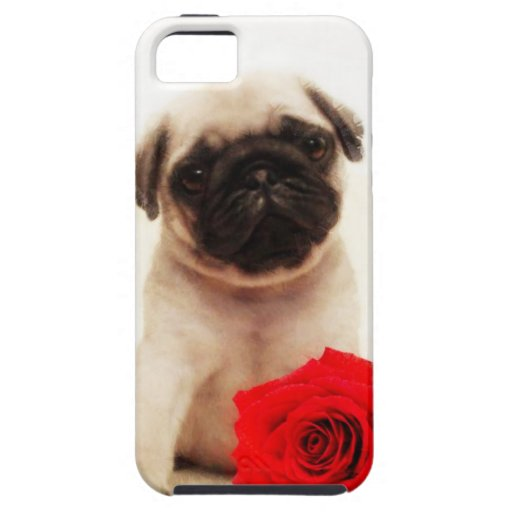 Pug puppy and rose iPhone 5 cover