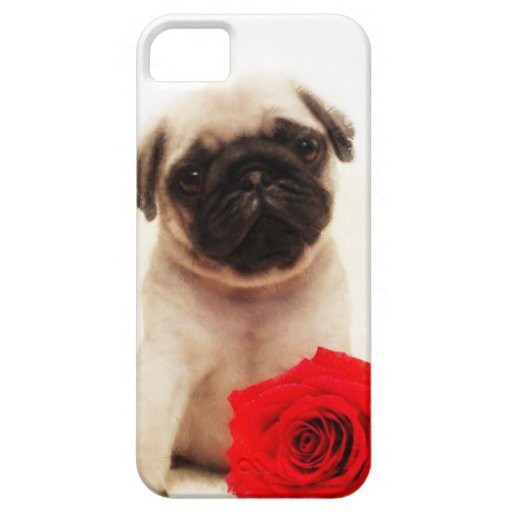 Pug puppy and rose iPhone 5 covers
