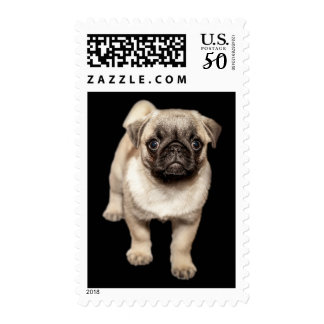 Pug Puppy Black Background Customizable Postage