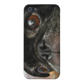 Pug Puppy Black Face Cover For iPhone 5