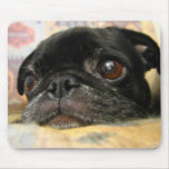 Pug Puppy Black Face Mouse Pad