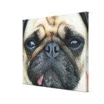 Pug Puppy Canvas Prints