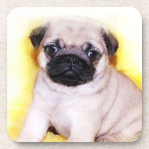 Pug Puppy Coasters