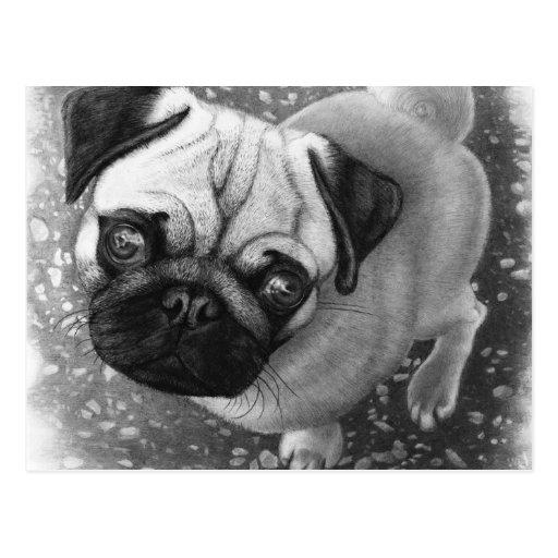 Pug Puppy Dog Art Post Cards
