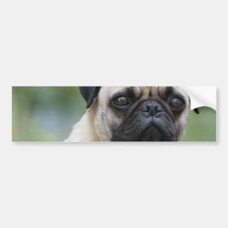 Pug Puppy Dog Bumper Stickers