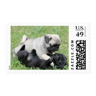 Pug Puppy Dogs Canine Postage Stamps