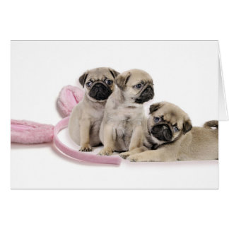 Pug Puppy Easter Card