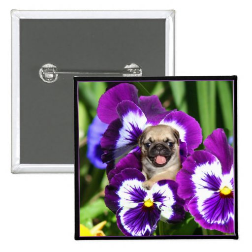 Pug puppy in pansies 2 inch square button