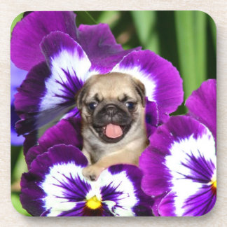 Pug puppy in pansies beverage coaster