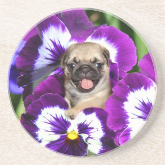 Pug puppy in pansies coaster
