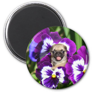 Pug puppy in pansies magnet