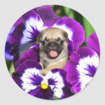 Pug puppy in pansies round sticker