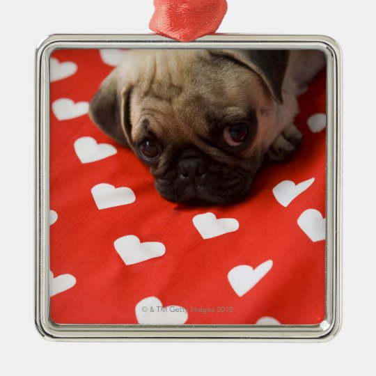 Pug puppy lying on bed, close up metal ornament