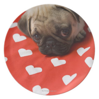 Pug puppy lying on bed, close up plates