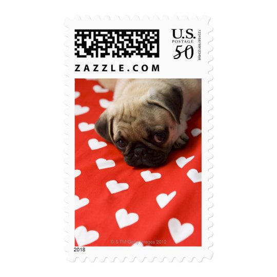 Pug puppy lying on bed, close up postage