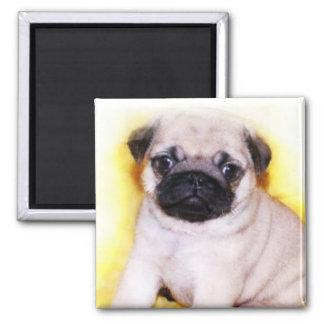 Pug Puppy magnet