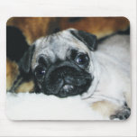 Pug Puppy Mousepad