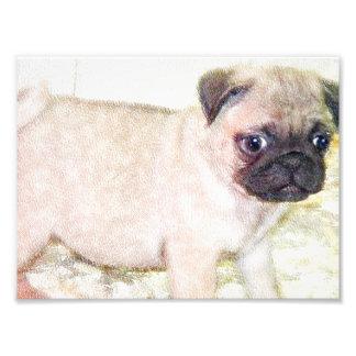 Pug Puppy Photo Print