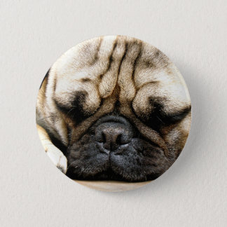 Pug puppy pinback button