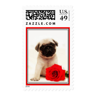 Pug puppy postage