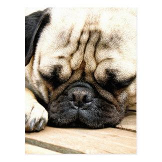 Pug puppy postcard