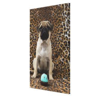 Pug puppy sitting against animal print 2