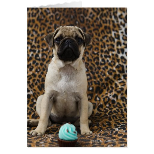 Pug puppy sitting against animal print 2 greeting card