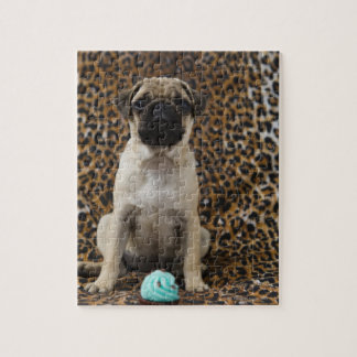 Pug puppy sitting against animal print 2 puzzles