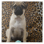 Pug puppy sitting against animal print 2 large square tile