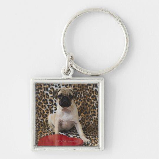 Pug puppy sitting against animal print keychain