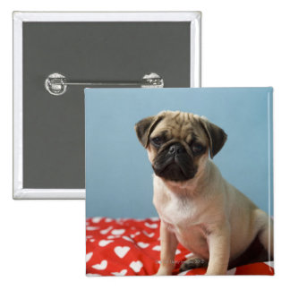 Pug puppy sitting on bed button