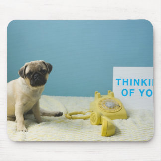 Pug puppy sitting on bed next to phone and mouse pad
