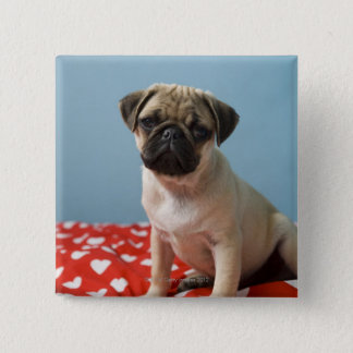 Pug puppy sitting on bed pinback button