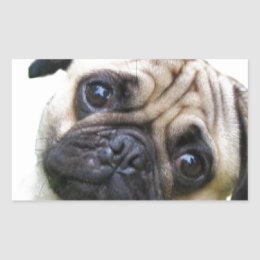 pug rectangular sticker
