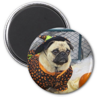 Pug Rescue Halloween Party, 2012 2 Inch Round Magnet